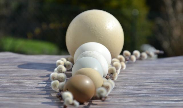 Deve kuşu yumurtasının faydaları